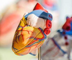 CBD Herzrythmusstörungen