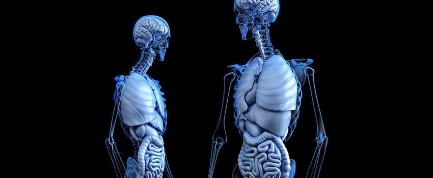 Positive Wirkung von CBD auf den Körper